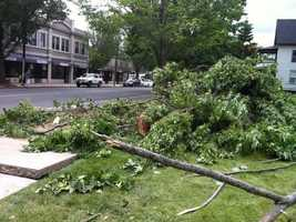Sergey Lichvin was killed when this tree fell on his car.