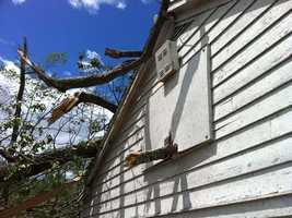 A tree limb impaled into a hoops board