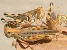 Grasshopper Plains is now part of Newburyport