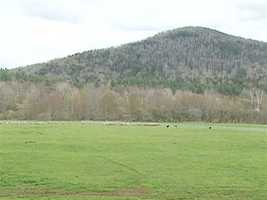 Woodcock Farm has 25 to 30 acres of pasture land, which supports up to 100 sheep.