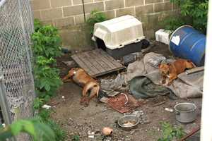 A neighbor was helping his father move on Sunday when he spotted four severely malnourished dogs in the side yard of a Montello Street home.