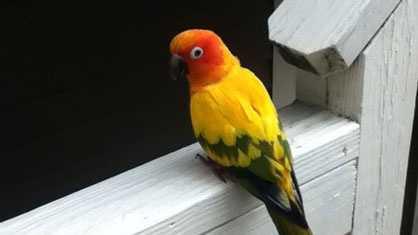 Waltham parrot