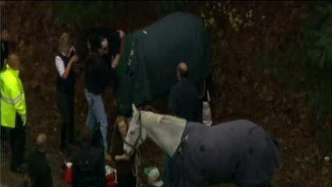 horse crash