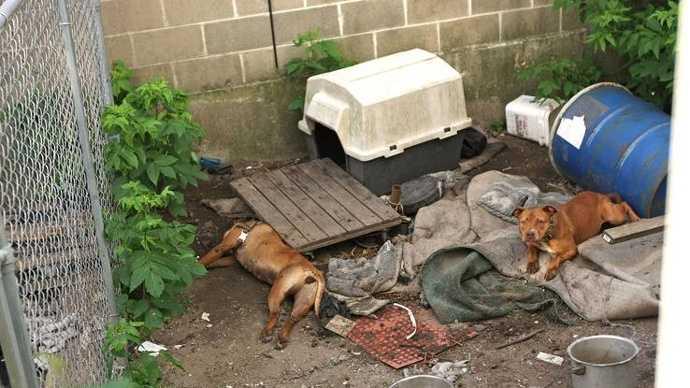 Brockton dog abuse