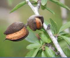1.) Almonds