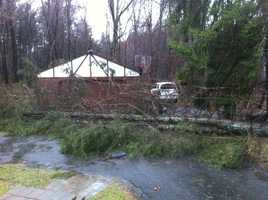 A tree down in Foxborough.