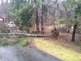 A fallen tree blocks a driveway in Foxborough