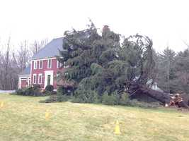A tree on a home in Grafton