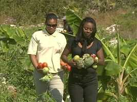 Chef Learmouth favors the small farms on the next island, for great greens and tomatoes.