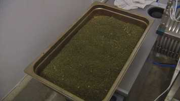 Each tray represents two pounds of ground-up cannabis.