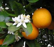 1 medium orange