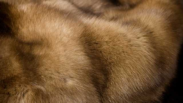 Luxury fur coat jacket