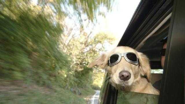 Pet Vehicles - Generic