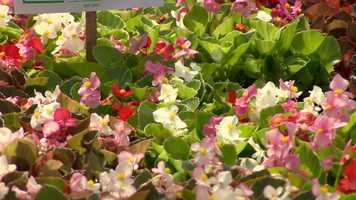 Cold sensitive flowers include impatiens, petunias, or zinnias.