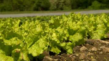 Vegetables such as broccoli, peas, onions and lettuce can also take a light frost.