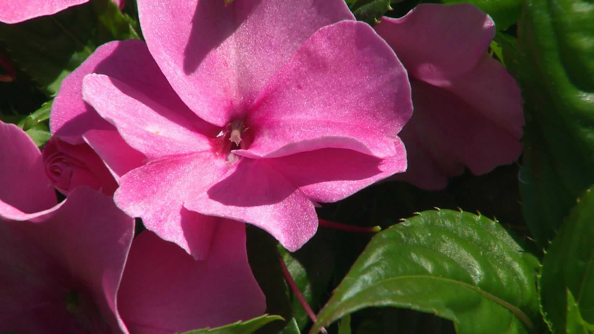 Flower SS 051013  (11).jpg