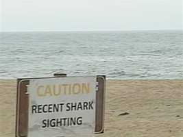 Last year, a swimmer was attacked by a shark in Truro.