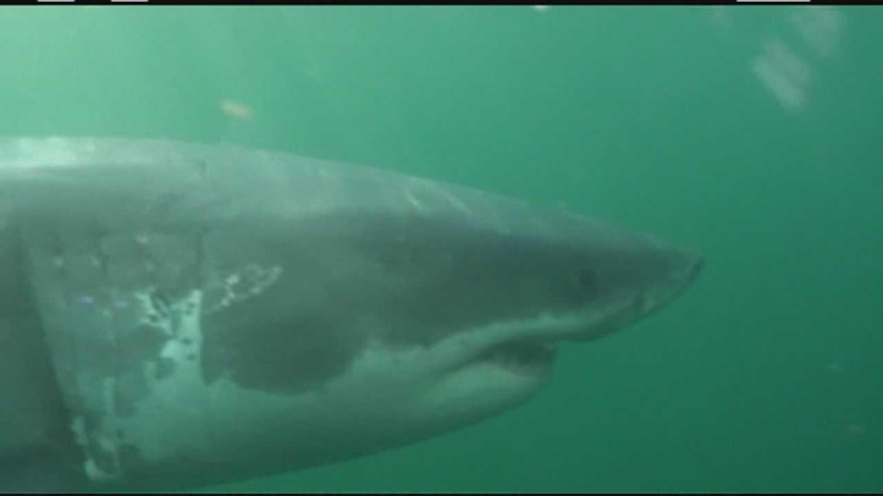 Sharks heading back to Cape