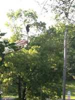 The bear was in a tree on Washington Street near the supermarket overpass on the Pike. Police had tried to tranquilize the bear, but eventually shot it.