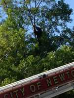 A black bear that was in a tree near the Massachusetts Turnpike in West Newton was shot and killed by Massachusetts Environmental Police early Sunday.
