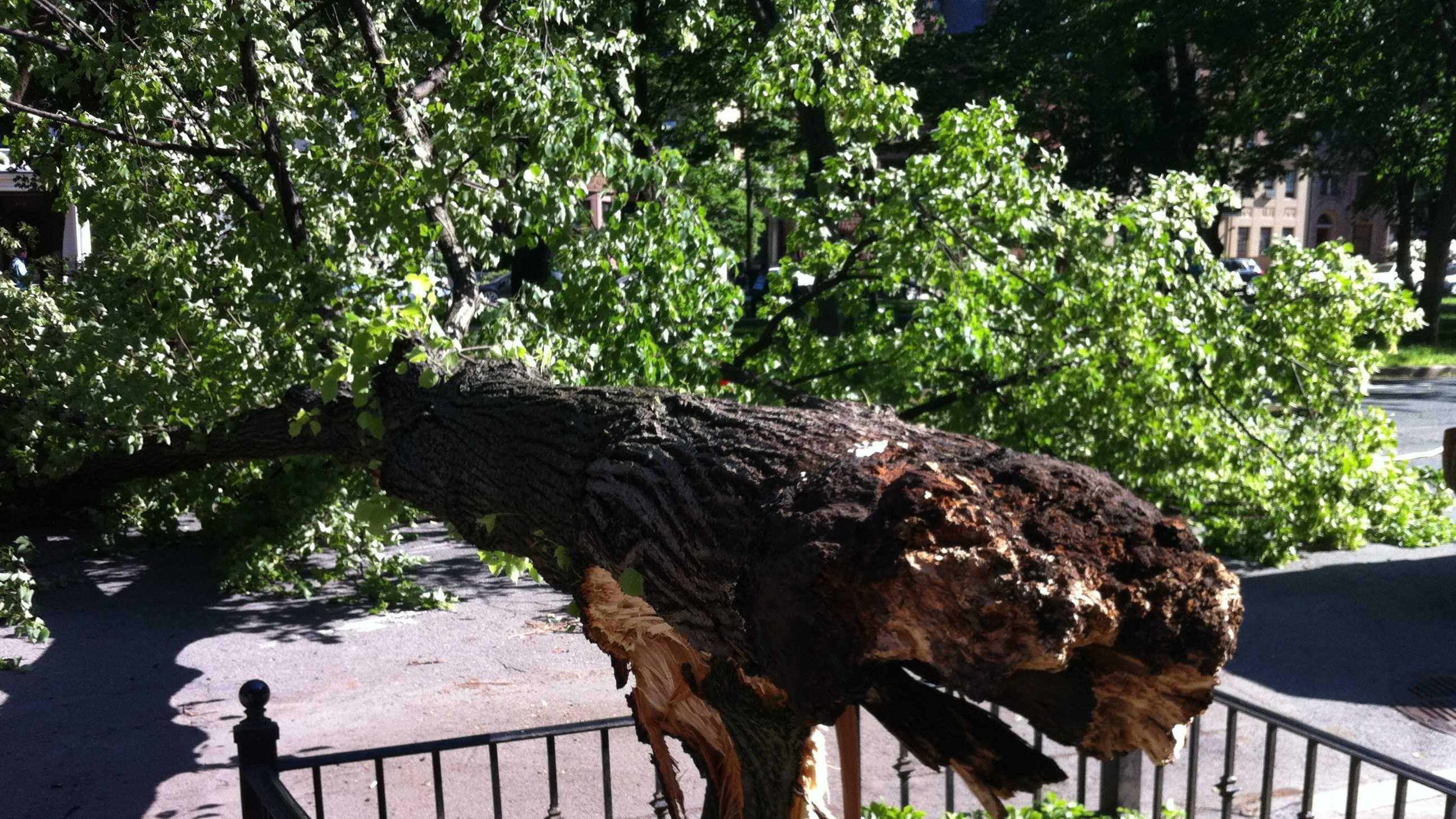 Commonwealth Avenue Tree Down 060213