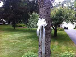 White ribbons in Amy's memory are tied around the trees outside her family's Wilbraham home.