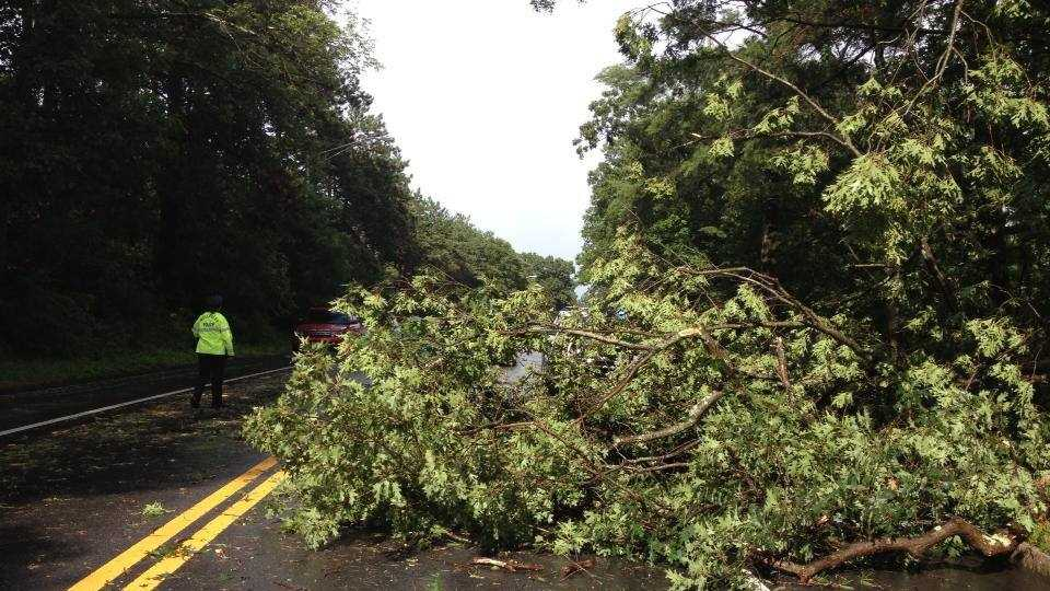 Tree Down Rt 135 Wellesley PD