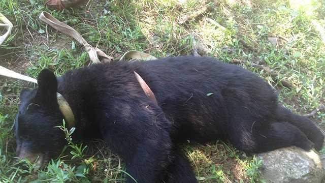 East Brookfield man shoots, kills bear in his yard