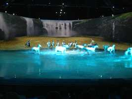 Several horses are released from backstage to run through the water