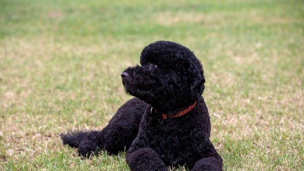 Obama New Dog 081913.jpg