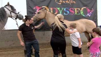 Cavalia's Odysseo is up and running for the next two weeks.
