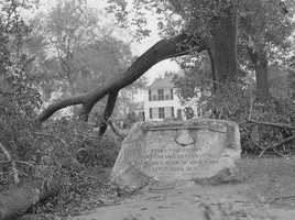 Trees down at the Minuteman Monument in Lexington.