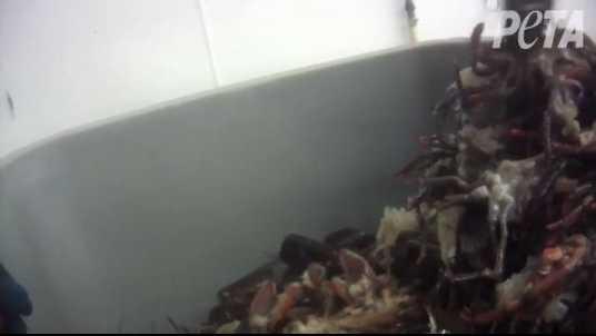 PETA Lobster.JPG