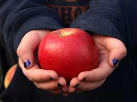 Applecrest Farm Orchards in Hampton Falls, N.H.