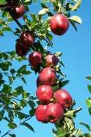 Red Apple Farm in Phillipston, Mass.