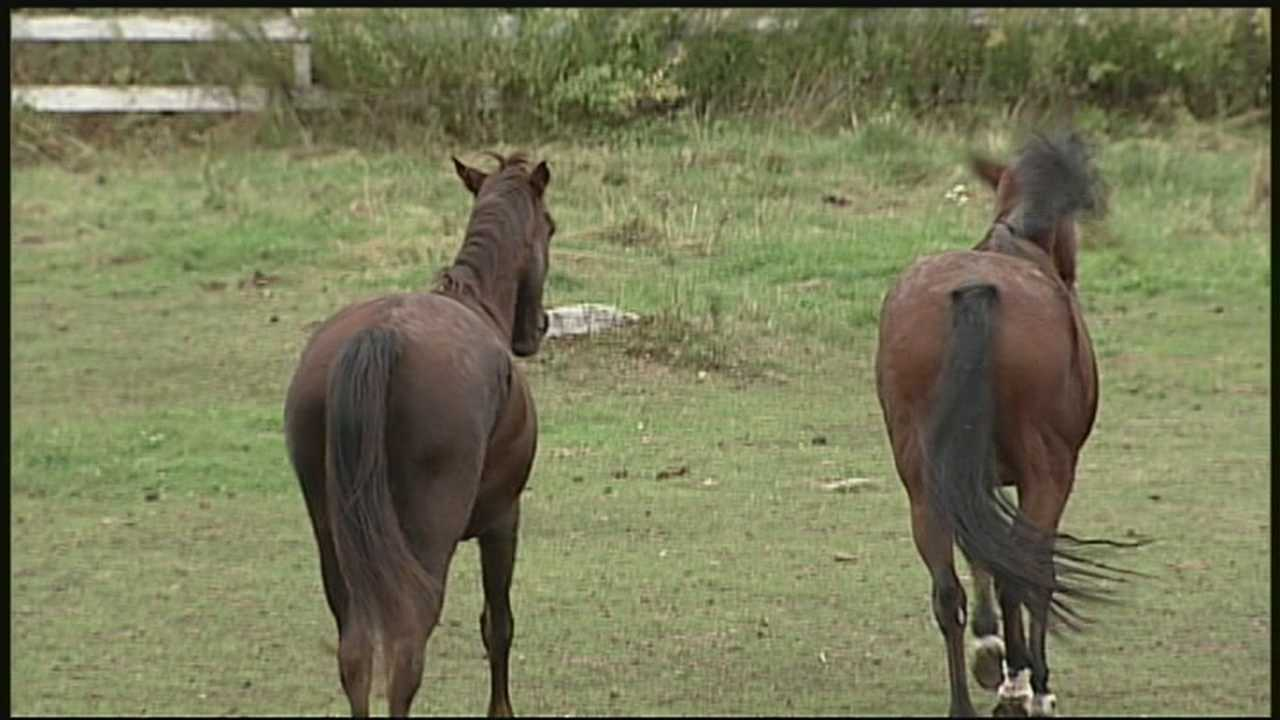Propsed rule would require horseback riders to pick up horse's manure