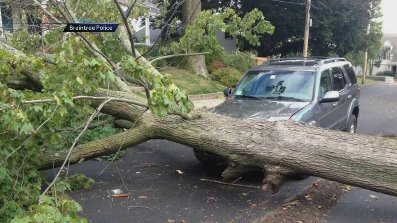 Braintree tree down