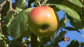 From farm stands to pie, apples are, of course, fall's favorite fruit.