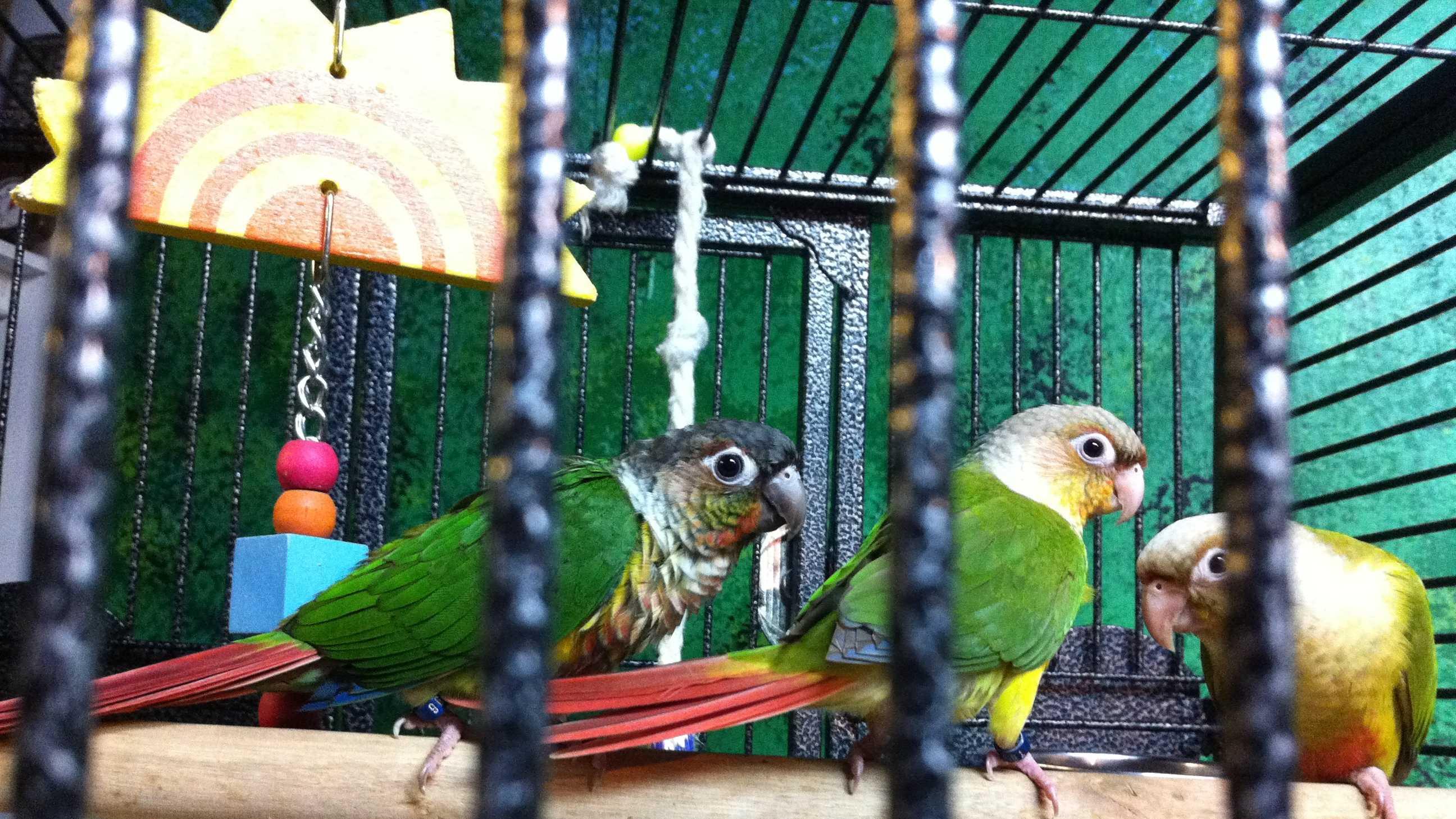 Rare parrot stolen from pet store