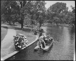 Swan Boats in Public Garden