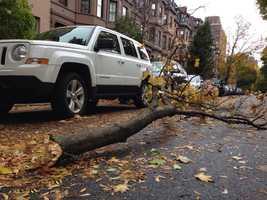A falling tree branch damaged a car in Boston's Back Bay neighborhood.