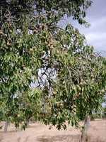6.) Tree nuts