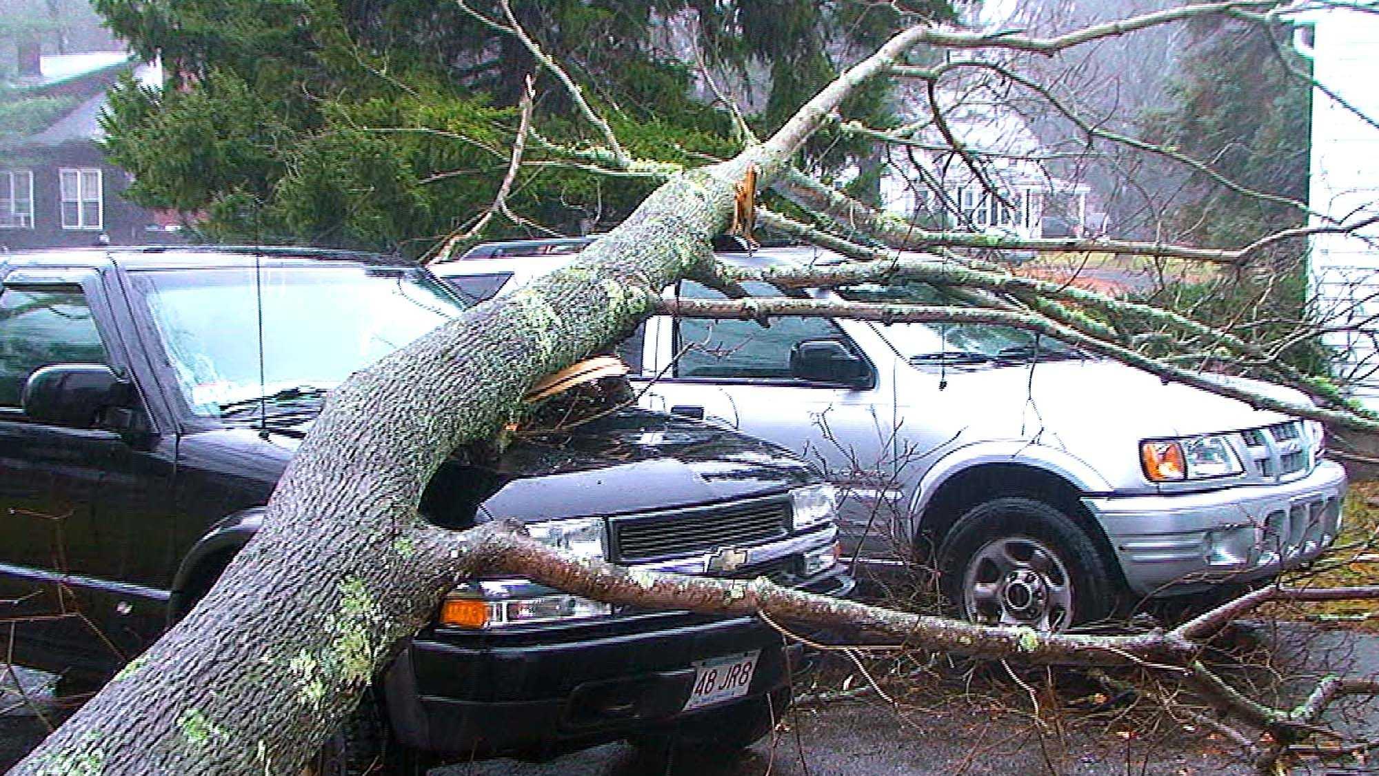 Trees down curran 1127