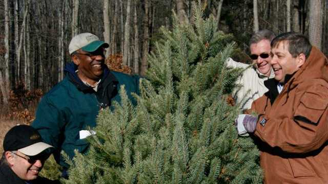 Crane Neck Christmas Tree Farm 113013