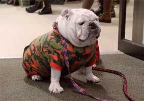 "Wreaths Across America mascot ""Gunnery Sgt. Bruce the Moose."""
