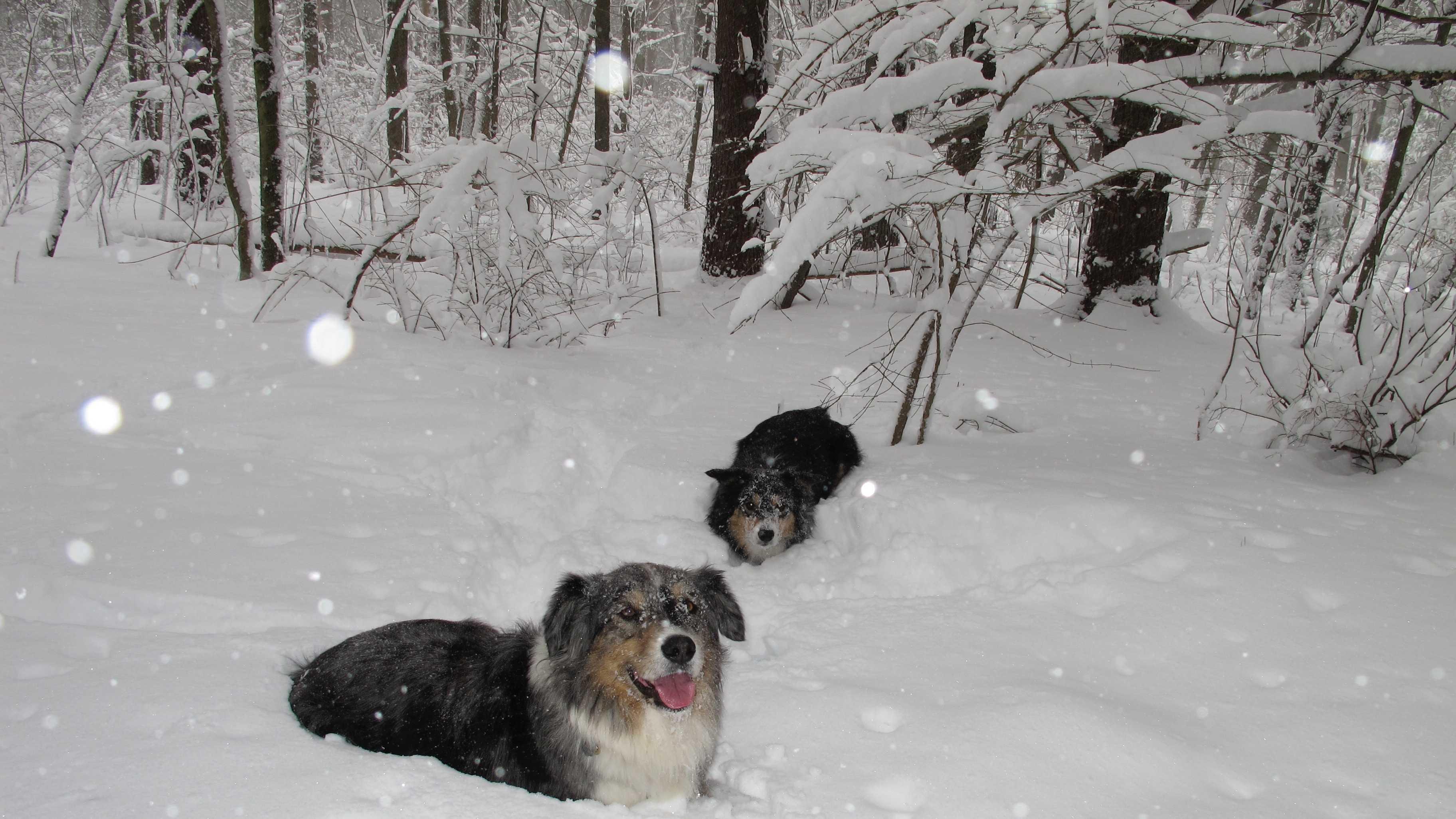 Snow Dogs 121813