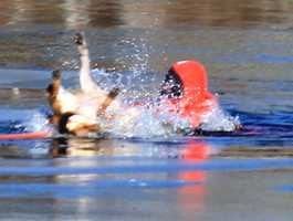 Firefighters wearing survival suits rescued the dog on Queen Sewell Pond in the Buzzards Bay section of Bourne.
