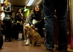 """Molina(center) takes the MBTA Green Line heading home with Charlie. A man(right, unidentified) asks Molina about Charlie's name and age. """"It's easier to talk to people,"""" said Molina. """"People pretend they are not lonely, but they are. Charlie is my only friend in this city."""""""