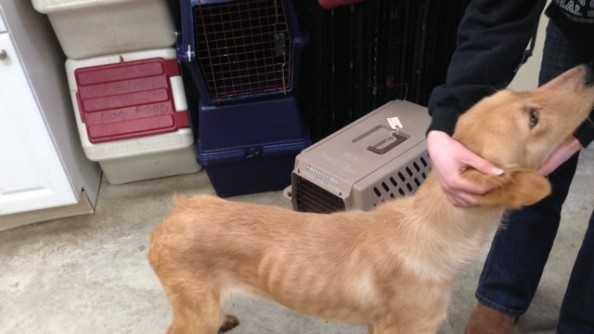 Sturbridge abandoned dog 012414