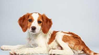 Puppy Bowl Dog 013014